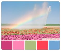 Field of Flowers Color Palette