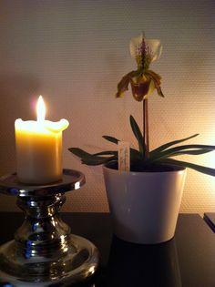 Paphiopedilum Sabot de Vénus Pillar Candles, Orchids, Candle Holders, Porta Velas, Candles, Orchid, Candlesticks, Candle Stand