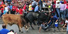 SIGN PETITION!!! IT IS TOMORROW!!! URGENT: Stop the February 1 Bull-killing Event in Mexico!          Bastards!!!