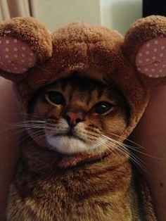 awww pics! :)  9. When this cat tried to be a bear for Halloween