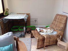 Indoor bunny room #ahutchisnotenough - I NEEEEED that chair!!!! Indoor Rabbit House, Bunny Room, Rabbit Ideas, Hutch Ideas, Rabbit Cages, Storage Solutions, Hare, Rabbits, Bunnies