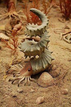 on Helioceras Heteromorph Ammonite, the most interesting extinct cephalopod specimen!Helioceras Heteromorph Ammonite, the most interesting extinct cephalopod specimen! Underwater Creatures, Underwater Life, Underwater Animals, Beautiful Creatures, Animals Beautiful, Beautiful Beautiful, Beautiful Pictures, Fauna Marina, Tier Fotos