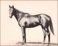 NOOR, CHAMPION RACE HORSE, HALL OF FAME by C W ANDERSON, VINTAGE 1952 | Art, Art from Dealers & Resellers, Prints | eBay!