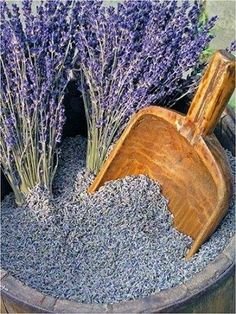 Lavender Buds For purchase info, click on link: http://dld.bz/LavenderBuds_Amazon pinned with Pinvolve - pinvolve.co