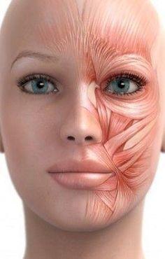 Мышцы лица нуждаются в физических упражениях Сидя или стоя в непринужденной удобной позе, наклонить голову назад. Пытаться поднять нижнюю губу над верхней губой. Держать позицию в течение 5 секунд. Затем расслабьте губы, но держите подбородок приподнятым. Повторить еще 4 раза.  Высуньте язык. Теперь наклоните голову назад и посмотрите на потолок. Придерживайте язык, указывая им вверх, к потолку. ...