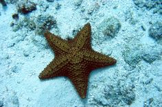 Save the Starfish from Demise; Investigate Sudden Deaths & Find Solutions: http://www.thepetitionsite.com/387/644/090/save-the-starfish-from-demise-investigate-sudden-deaths-find-solutions/