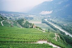 Rhone valley vineyard