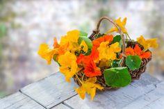 Kapucínka bola v roku 2013 vyhlásená za bylinku roka Verticle Garden, Dried Apples, Cabbage Leaves, Herb Pots, Beneficial Insects, Drought Tolerant Plants, Grow Your Own Food, Companion Planting, Garden Crafts