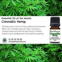 Cannabis sativa has long been known to have calming and anti-anxiety effects. Our Cannabis hemp oil is high in myrcene, a chemical compound which has been found in medical studies to carry antidepressant and anxiolytic properties. #cannabis #cannabiscures #hemp #cannabisoil #hempoil #holistichealth #reiki #aromatherapy #essentialoil #holistichealing #naturalhealing #holisticliving #wellness #consciousliving #energyhealing #energywork #chakrabalancing #meditation #mantra