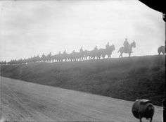 WWI, Oct 1916, Somme; Silhouette of British troops taking mules to water along the Amiens-Albert road. © IWM
