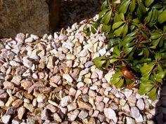 Pink Marble Gravel in a Rockery Flower Bed. Decorative Gravel, Pink Marble, Flower Beds, Patio, Landscape, Garden, Flowers, Plants, Scenery