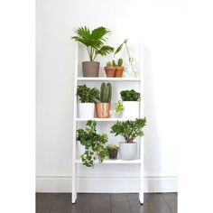 home 4 ideas for decorating with plants found on Polyvore featuring home and home decor