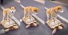 When This Dog Hitched A Ride, He Had No Idea It Would Be THIS Slow. Or This Adorable!