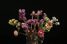 """Photographing dried /pressed flowers is not a new technique in photography. In fact it has been done in the """"still life"""" category for a number of years Dried And Pressed Flowers, Dried Flowers, Flower Boquet, Diy Flower, Collage, Dried Flower Arrangements, Hanging Flowers, How To Preserve Flowers, Still Life Photography"""