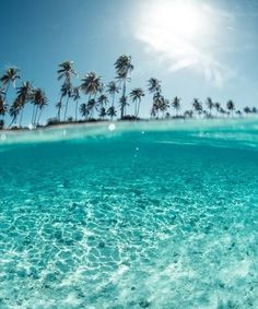 Tropical Palm Trees Crystal Clear Water Beach #tropical