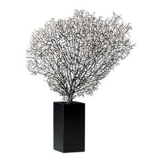 Cyan Designs Natural Sea Fan with Base in Natural and Black