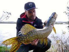 Herbsthecht Predator, Fish, Pisces