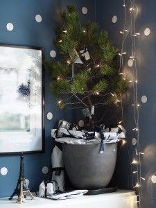 Blogg — by Rust Rust, Plants, Advent Calendar, Flora, Plant, Planets
