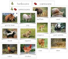 Herbivore, Carnivore, Omnivore Sorting Cards (C2, W2)