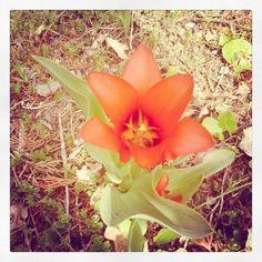 A kert.                  ketcica készítette ezt a képet. Plants, Plant, Planets