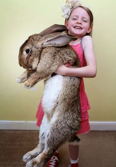 """""""Bunnies are cute little pets"""", they said. """"They don't eat a lot of food"""", they said."""