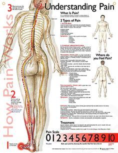 Acupuncture Pain Relief Understanding Pain anatomy poster defines the types of pain, lists symptoms for each and includes a pain scale. Pain Scale, Neurology, Anatomy And Physiology, Human Anatomy, Massage Therapy, Physical Therapy, Occupational Therapy, Chronic Pain, Chronic Illness