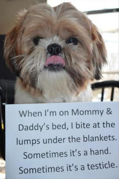 Lol dog shaming