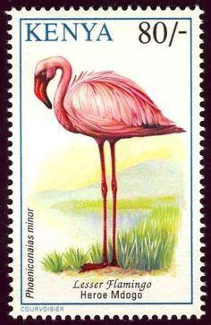 Kenya-El Flamingo Enano