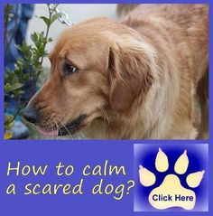 5 tips to help a scared dog overcome anxiety http://www.bestdogfoodd.com/scared-dog-help/