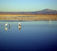 Chaxa Lagoon in the Atacama Salt Flat