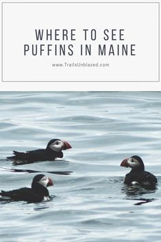 Where to see puffins along the coast of Maine. : Where to see puffins along the coast of Maine. Maine Road Trip, East Coast Road Trip, Maine New England, New England Travel, Places To Travel, Places To Go, Travel Destinations, Visit Maine, Parcs