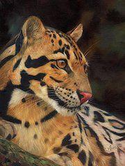 Animal Paintings: David Stribbling - Art - Clouded Leopard  by David Stribbling