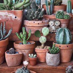 happy little cactus garden. Love the uneven clay pots - Kaktus Cactus Pot, Cactus Flower, Flower Pots, Cacti And Succulents, Cactus Plants, Succulent Ideas, Potted Plants, Garden Whimsy, Miniature Plants