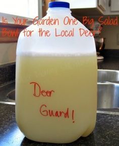Deer Guard Deer Guard ~ Recipe ~ Do the local deer think of your planters as a salad bowl? Guard Deer Guard ~ Recipe ~ Do the local deer think of your planters as a salad bowl?Deer Guard ~ Recipe ~ Do the local deer think of your planters as a salad bowl? Homemade Deer Repellant, Container Gardening, Gardening Tips, Organic Gardening, Flower Gardening, Gardening Gloves, Vegetable Gardening, Deer Proof Plants, Plants That Repel Deer
