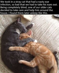 A blind stray being comforted by his newly adoptive brother. 30 Animal Pictures That Will Make You A Better Person I Love Cats, Cute Cats, Funny Cats, Baby Animals, Funny Animals, Cute Animals, Crazy Cat Lady, Crazy Cats, Goofy Dog