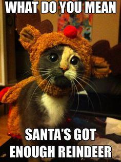 """Résultat de recherche d'images pour """"merry christmas animals"""""""