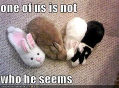 Browse cute bunny photos shared by My House Rabbit fans. If you have fun house rabbit pictures to share, you can submit them to our gallery! Funny Bunnies, Cute Funny Animals, Cute Bunny, Cute Baby Animals, Funny Cute, Bunny Meme, Bunny Bunny, Adorable Bunnies, Bunny Rabbits