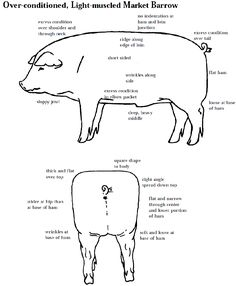 4 h pig diagram spdt switch wiring 105 best 4h swine images farming piglets agriculture judging livestock you are going to make it