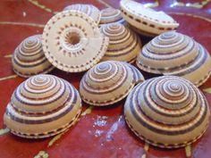 Sundial Seashells 10  Seashell Supply  craft by ShellsUnlimited, $6.00