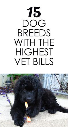 The 15 Dog Breeds With The Biggest Vet Bills http://iheartdogs.com/15-dog-breeds-with-the-highest-vet-bills/