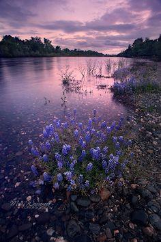 American River Parkway, Sacramento, California.