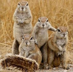 Prairie Dog Family Photo at Squirrel Studio Animals And Pets, Baby Animals, Funny Animals, Cute Animals, Animal Babies, Wild Animals, Photo Animaliere, Photo Time, Photo Shoot