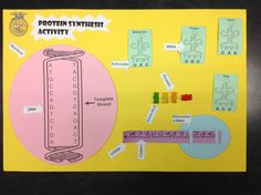 Check out this protein synthesis activity I created for my Ag biology classes to help my students better understand transcription and translation. What you see here is the completed activity. Email me for the templates...Marcosrruiz@gmail.com
