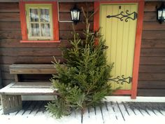 Christmas tree on it´s way in by Rikke Isabelle on