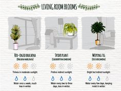 The Easiest Indoor Plants and How to Care for Them