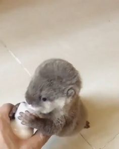 Baby Otter Drinking Milk via aww on April 06 2018 at Cute Funny Animals, Cute Baby Animals, Animals And Pets, Happy Animals, Wild Animals, Cute Puppies, Cute Dogs, Cute Babies, Baby Otters