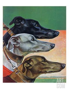 Greyhounds, Saturday Evening Post Cover, March 1941 Giclee Print by Paul Bransom Greyhound Kunst, Saturday Evening Post, Film D'animation, Grey Hound Dog, Norman Rockwell, Lurcher, Bedlington Whippet, Italian Greyhound, Dog Portraits