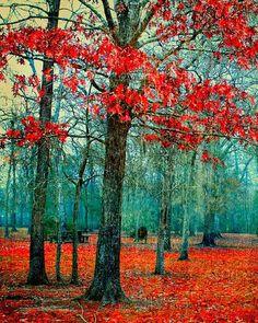 Picturesque Trees in Autumn