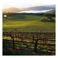 Best Napa Valley Wineries to Visit ❤ liked on Polyvore featuring backgrounds, pictures, fillers, nature and photo