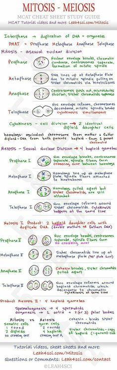 biology notes Mitosis and Meiosis MCAT Cheat Sheet Study Guide - learn what happens in each step: Prophase, Metaphase, Anaphase, Telophase and how they all tie together Ap Biology, Science Biology, Teaching Biology, Life Science, College Teaching, Biology College, Science Notes, Science Notebooks, Science Penguin